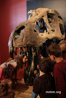 Kids investigate T. rex at MNHM